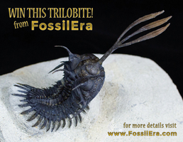 Win a Walliserops! FossilEra's March Fossil Giveaway