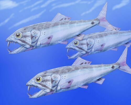 Artists reconstruction of Enchodus.  By Dmitry Bogdanov, Creative Commons License