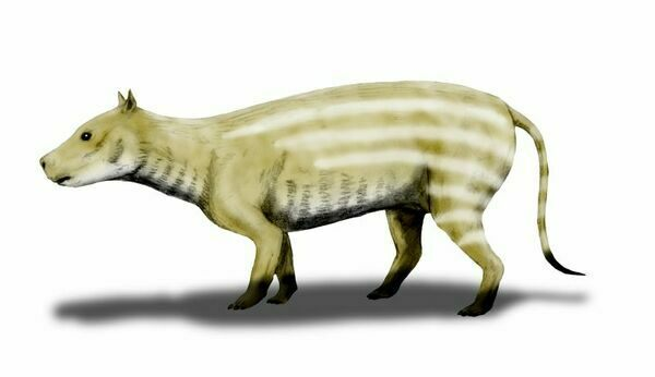 Artists reconstruction of Merycoidodon.  By Nobu Tamura (http://spinops.blogspot.com)