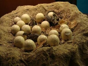 Hadrosaur nest reconstruction, by Drow male