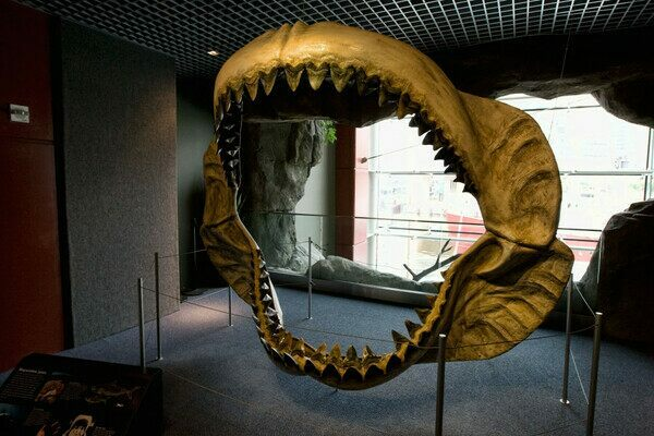 Reconstructed Megalodon jaw at the National Aquarium in Baltimore