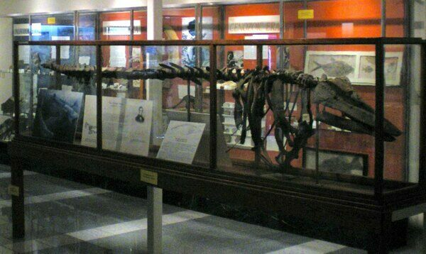 The skeleton of the Charlotte Whale on display at the Perkins Geology Museum in Vermont.