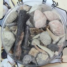 "Fossil ""Shark Tooth Stew"" Marine Fossils Kit"