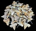 Small Wire Wrapped Fossil Shark Tooth Pendants - 25 Pieces - Photo 2