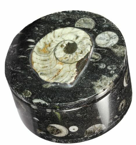 "3.5"" Round Fossil Goniatite & Orthoceras Jewelry Box - Photo 1"
