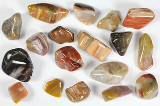 Tumbled Arizona Petrified Rainbow Wood - 8oz (~18 pc.)