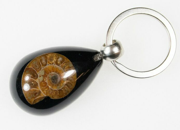 Authentic Fossil Ammonite Keychain - Black - Photo 1