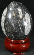 "Polished Fossil Orthoceras (Cephalopod) ""Egg"" For Sale, #23528"