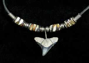 Fossil Bull Shark Tooth Necklace For Sale, #3536