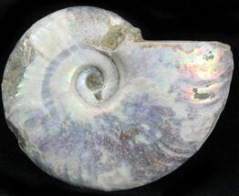 "Buy 1.7"" Silver Iridescent Ammonite - Madagascar - #29875"