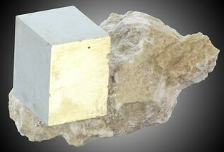 Pyrite - Fossils For Sale - #30966