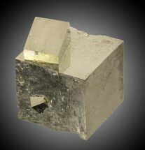 "1.15"" Wide Pyrite Cube Cluster - Navajun, Spain For Sale, #31025"