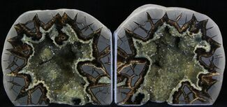 Septarian - Fossils For Sale - #33132