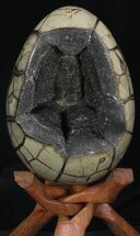 Septarian with Black Calcite  - Fossils For Sale - #33723