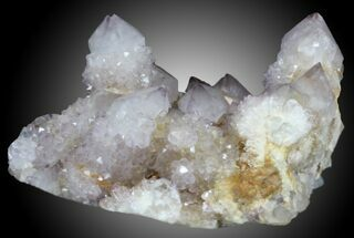 "3.05"" Cactus Quartz (Amethyst) Cluster - South Africa For Sale, #33896"