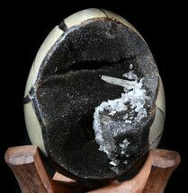 "Buy 4.2"" Septarian ""Dragon Egg"" Geode - Shiny Black Crystals - #34714"