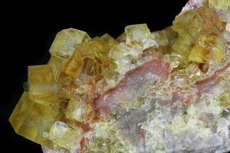 "Buy 3.9"" Lustrous, Yellow Cubic Fluorite Crystals - Morocco - #32305"