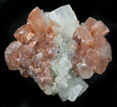 Aragonite - Fossils For Sale - #37317