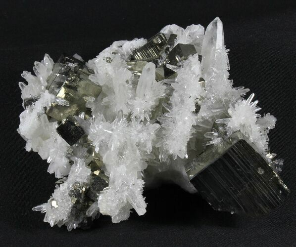 Collector Quality, Quartz With Cubic Pyrite - Peru