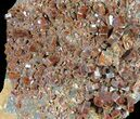 "5.25"" Red Vanadinite Crystal Cluster - BIG CRYSTALS! - #39163-1"