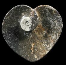 "4.5"" Heart Shaped Fossil Goniatite Dish For Sale, #39347"