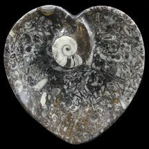 "Buy 4.5"" Heart Shaped Fossil Goniatite Dish - #39382"
