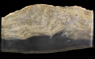 Stromatolite - Fossils For Sale - #40113