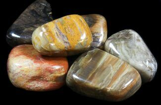 Buy Bulk Tumbled Petrified Wood - 3 Pack - #41593