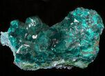 "2.3"" Gemmy Dioptase Cluster (Large Crystals) - Namibia - #44660-2"