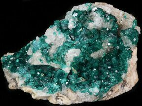 "Buy 2.48"" Gemmy Dioptase Cluster on Calcite - Kazakhstan - #44659"