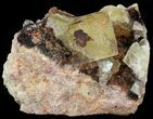 "1.5"" Lustrous, Yellow Cubic Fluorite Crystals - Morocco  - #44877-1"