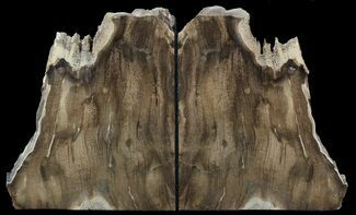 "6.3"" Petrified Wood Bookends - Oregon For Sale, #45371"