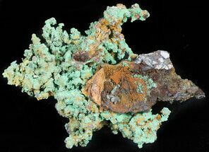 "Buy 4.8"" Natural, Native Copper Formation - Morocco - #45457"