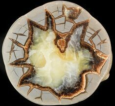 Septarian - Fossils For Sale - #45912