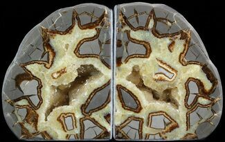 Septarian - Fossils For Sale - #45933
