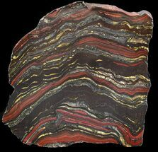 "5.5"" Polished Tiger Iron Stromatolite - (2.7 Billion Years) For Sale, #46802"