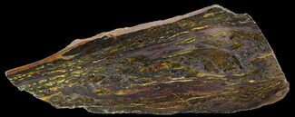 "Buy 8.8"" Polished Tiger Iron Stromatolite - (2.7 Billion Years) - #46804"