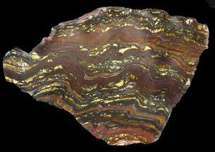 "Buy 5.9"" Polished Tiger Iron Stromatolite - (2.7 Billion Years) - #46807"