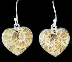 Buy Fossil Ammonite Earrings - Sterling Silver - #48745