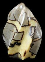 "6"" Polished Septarian Flame For Sale, #48815"