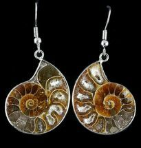 Buy Fossil Ammonite Earrings - 110 Million Years Old - #48829