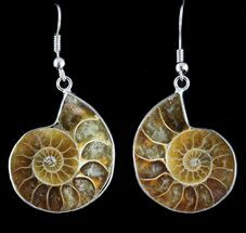 Fossil Ammonite Earrings - 110 Million Years Old For Sale, #48830