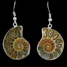 Buy Fossil Ammonite Earrings - 110 Million Years Old - #48850