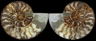 "7.7"" Cut & Polished Ammonite Pair - Agatized For Sale, #49907"