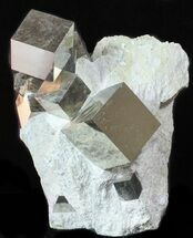 Pyrite - Fossils For Sale - #50697