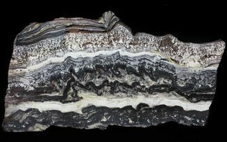 Buy Rare North Pole Dome Stromatolite Slice - 3.49 Billion Years - #50758