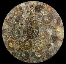 "8"" Plate Made Of Agatized Ammonite Fossils For Sale, #51047"