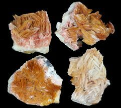 "Buy 1-2"" Orange Bladed Barite With Galena Specimens - Morocco - #51487"