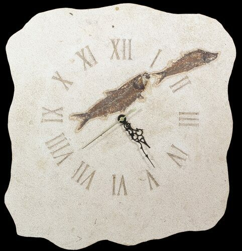 "17"" Tall Clock With Two Knightia Fish Fossils - Wyoming"