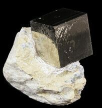 Pyrite - Fossils For Sale - #51222
